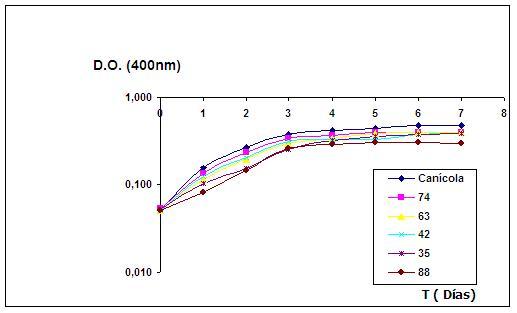 Figura 1-. Cinéticas de crecimiento de  las cepas L-35, L-42, L-63, L-74, y L-88 usando como control  la cepa  L. interrogans serovar Canicola en medio MEJH en condiciones de cultivo agitado.