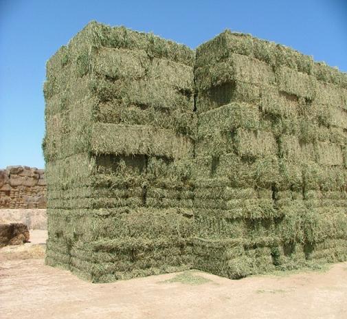 Alfalfa recién empacada, nótese el color verde normal del heno de alfalfa.