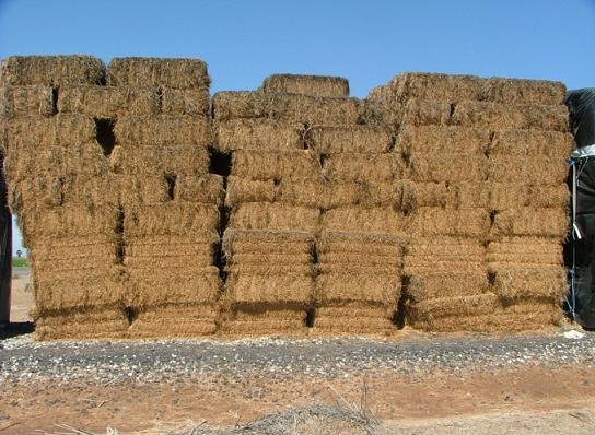 Alfalfa almacenada al aire libre por largos periodos de tiempo y climas cálidos, obsérvese la coloración café como reflejo del daño por calor del heno de alfalfa.