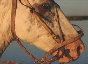caballo-marron-cara-224