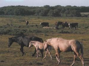 caballos-y-vacas-204