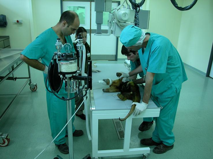 El Dr. Gustavo Gachen a la derecha con la pata del Oso Melero, y a la izquierda observando el Dr. Martín Falzone.