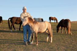James Allison prepara un caballo para utilización en investigaciones científicas. Los caballos tienen que ser bien aclimatados al manejo antes de utilización en las investigaciones científicas.