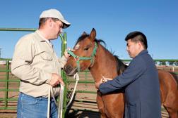 Técnico James Allison (izquierda) y médico veterinario oficial Massaro Ueti colectan una muestra de sangre de un caballo infectado con Theileria equi.