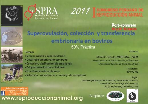 Revista Veterinaria Argentina Superovulacion Coleccion Y Transferencia Embrionaria En Bovinos Peru
