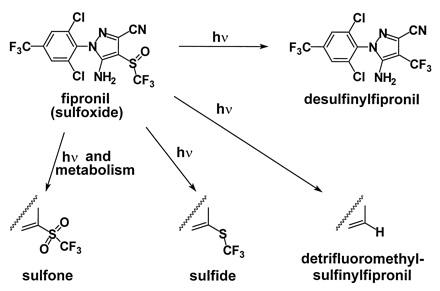Fig.2: Degradación fotoquímica de Fipronil Adaptado de: DominikHainzl, & JohnE. Casida. PNAS 1996; 93:12764-12767
